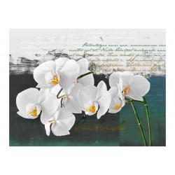 Fototapet - Orchid - digter...