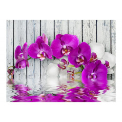 Fototapet - Violet orchids...