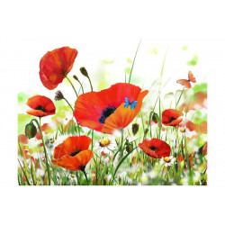 Fototapet - Country poppies