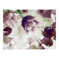 Fototapet - Heavenly tulips