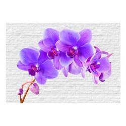 Fototapet - Violet excitation