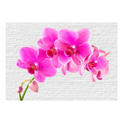 Fototapet - Pink excitation