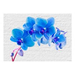 Fototapet -  Blue excitation