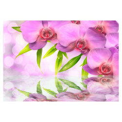 Fototapet - Orchids in...
