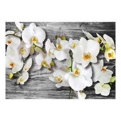 Fototapet - Callous orchids...