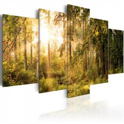 Billede - Magic of Forest
