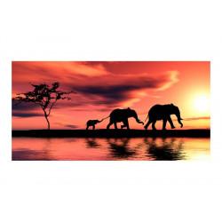 Fototapet XXL - elephants:...