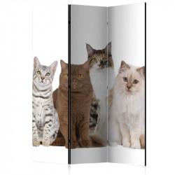 Skærmvæg - Sweet Cats [Room...