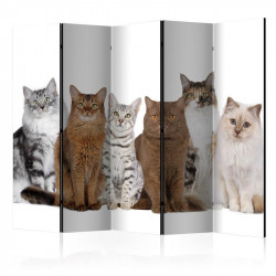 Skærmvæg - Sweet Cats II...
