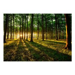 Fototapet - Mystical Morning