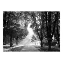 Fototapet - Path of Memories
