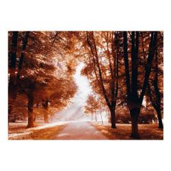 Fototapet - Autumn Park