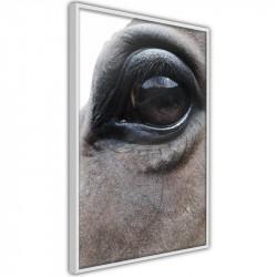 Plakat - Gentle Eyes