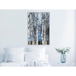 Plakat - Winter Birch Trees