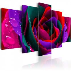 Billede - Multicoloured rose