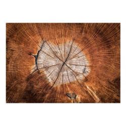 Fototapet - The Soul of a Tree