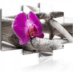 Billede - Orchid on beach