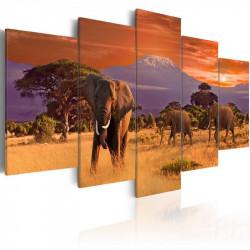 Billede - Africa: Elephants