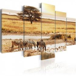 Billede - Zebras on a savannah