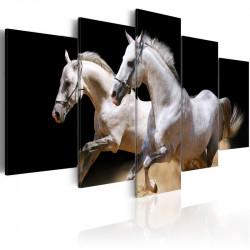 Billede - Gallop- freedom...