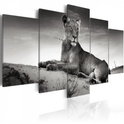 Billede - Lioness in a desert