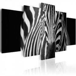 Billede - Zebra look