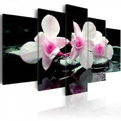 Billede - Rest of orchids