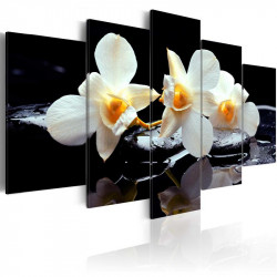 Billede - Orchids with...