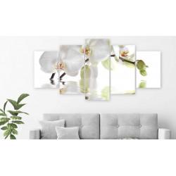 Billede - Wonderful Orchid...