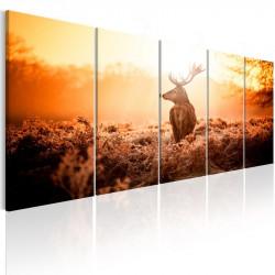 Billede - Deer at Sunset