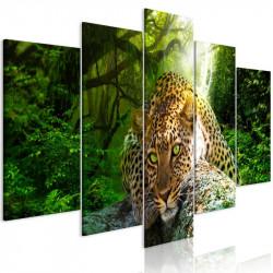 Billede - Leopard Lying (5...