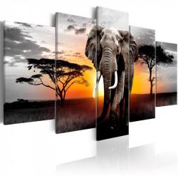 Billede - Elephant at Sunset