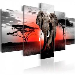 Billede - Lonely Elephant