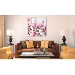 Billede - Blooming magnolia...
