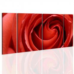 Billede - Passionate rose
