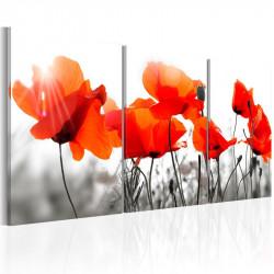 Billede - Charming Poppies