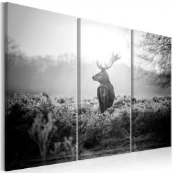 Billede - Black and White...
