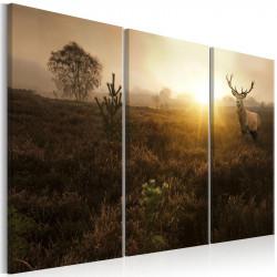 Billede - Foggy Field I