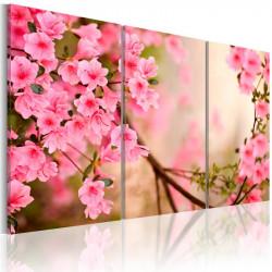 Billede - Cherry flower