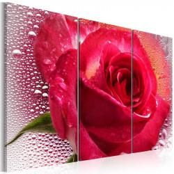 Billede - Lady Rose - triptych