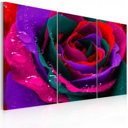 Billede - Rainbow-hued rose