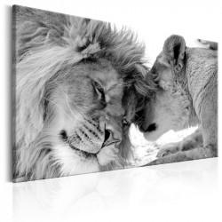 Billede - Lion's Love