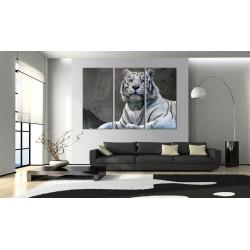 Billede - White tiger