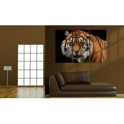 Billede - A wild tiger
