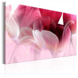 Billede - Nature: Pink Tulips