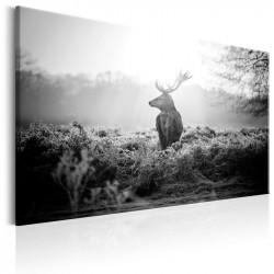 Billede - Black and White Deer