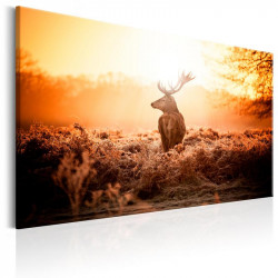 Billede - Deer in the Sun