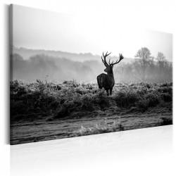 Billede - Deer in the Wild
