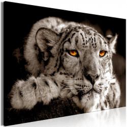 Billede - Magic Eyes (1...
