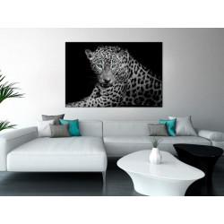 Billede - Leopard Portrait...